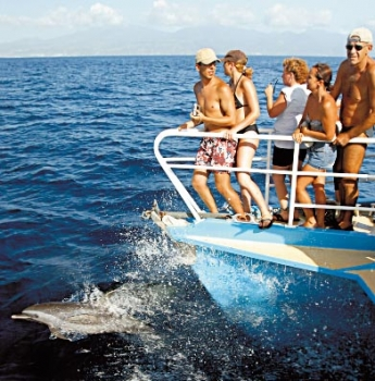 Whale watching in bathing trunks and bikinis