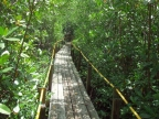Walkway through the mangroves