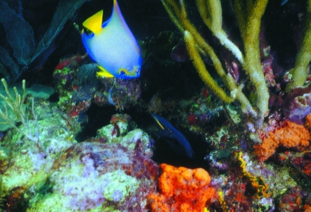 Colouful reefs